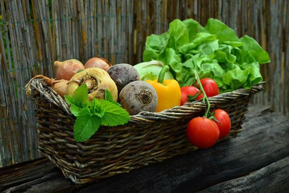 Zelenina do bílkovinové diety